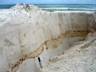 Layers of weathered oil near Pensacola, FLorida as studied by Florida State University. (Photo for GoMRI by Markus Huettel, Florida State University)