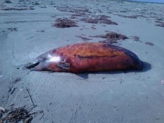 dead dolphin 2