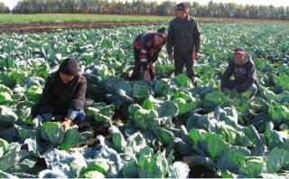 prisoners farming
